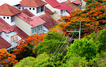 brigt: Red roofs and flower trees at Pratumnak Hill Pattaya