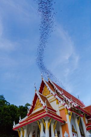 MILLION: Hundred Million Bats at Wat Khao Chong Pran, Ratchaburi Thailand