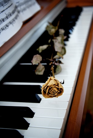 Dried rose on a piano photo