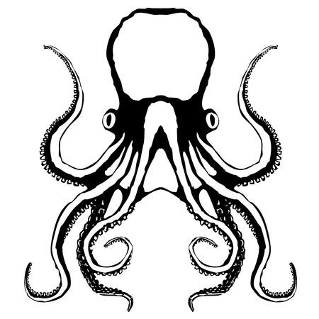 tentacles: Sketch of an octopus, vector