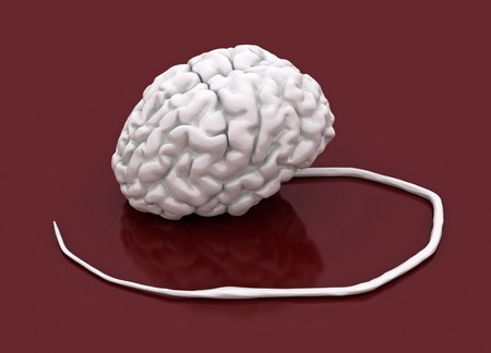White 3d human brain and spinal cord model Stock Photo - 4371140