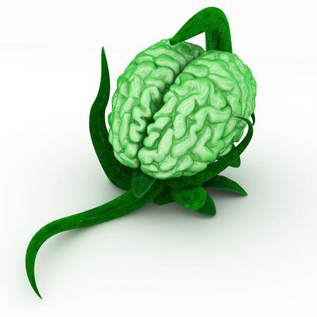 Green 3d vine plant bearing a human brain photo