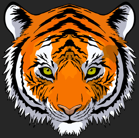 Hand drawn tiger head front view, vector Vector