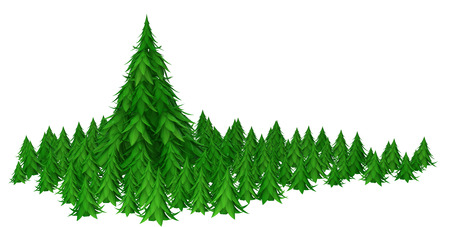 giant: Fir trees 3d models isolated with white background