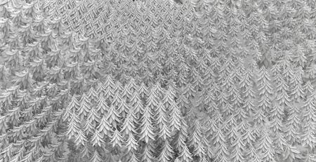 fir tree: Fir tree forest 3d models background, white, horizontal