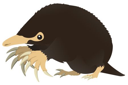 Mole animal design element, color vector cartoon illustration horizontal