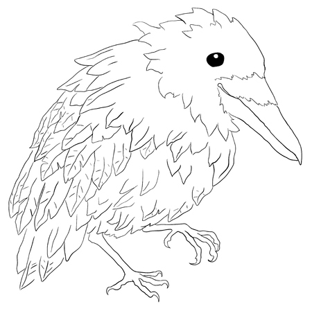Small crow bird, vector, horizontal line drawing, over white, isolated