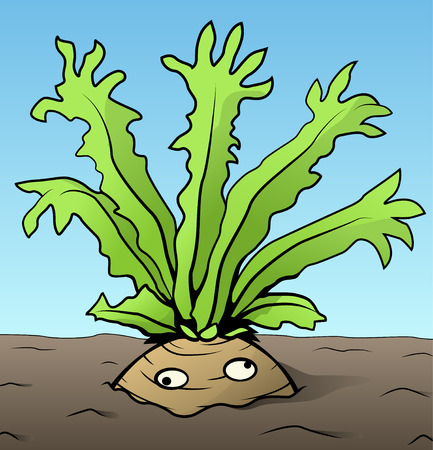 Root vegetable strange arms funny cartoon color drawing, vector illustration, horizontal