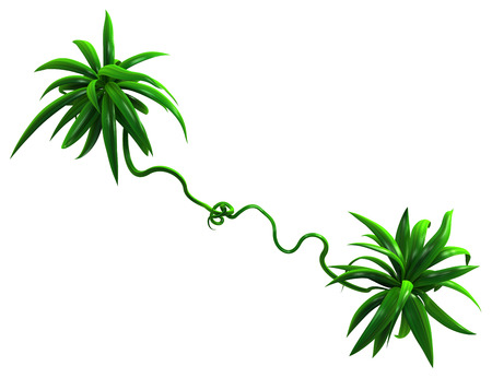 Plant vines green growing twisting thin leaves bunches, 3d illustration, horizontal, isolated, over white Фото со стока