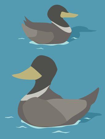 Ducks swimming, vector cartoon color illustration vertical