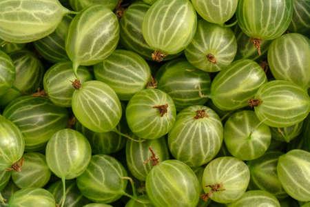 Closeup macro on healthy green gooseberries texture background 版權商用圖片