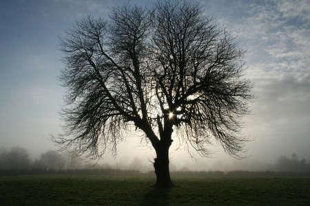 spooky tree: Spooky Tree Stock Photo