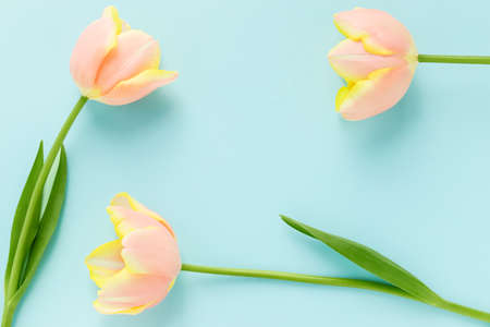 3 orange and yellow tulips and blue background