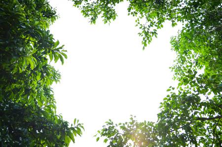 Boom met groene bladeren framing een heldere blauwe hemel: onderaanzicht achtergrond Stockfoto