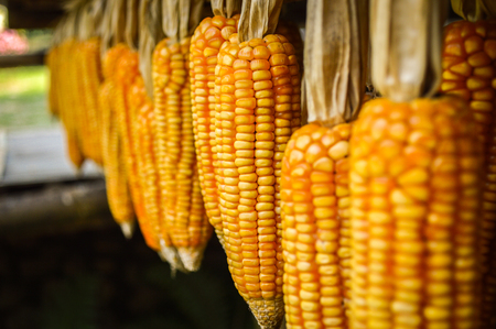 Drying corn hanging outside house Stock Photo
