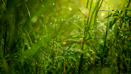 close up of green grass with drew drops in the morning, natural concept background.