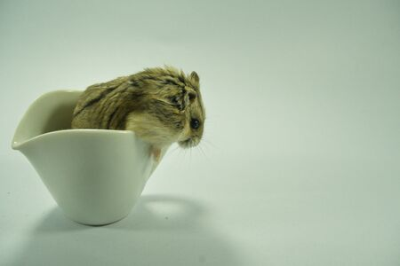 Little adorable hamster peeking out of a white cup. Stockfoto