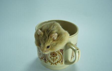 Hamster peeking out of a coffee cup