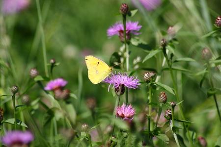 eight: butterfly golden eight