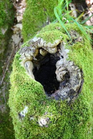 knothole, tree hole with moss