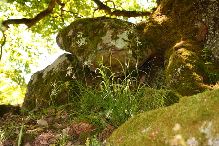 knothole: knothole, tree hole with moss