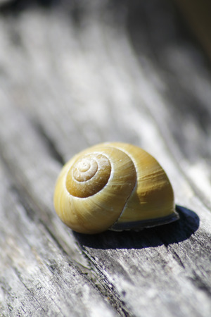 Snail with a snail shell
