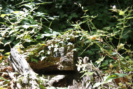 elves: Thicket, undergrowth, with wood in a mystic wood Stock Photo