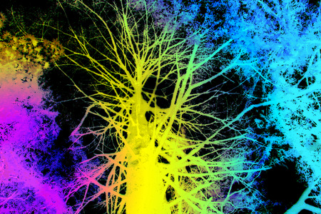Tallness, old, immense tree in rainbow colors Pink, Yellow, turquoise