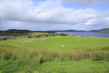 Meadow, pasture in the hole Duntelchaigole, Inverness shire in the Highlands, Stock Photo