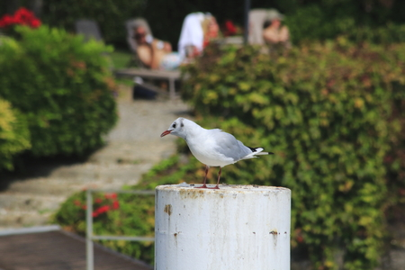 Gull sit on a mole on the shore of Lake Como in Italy, Stock fotó - 97940799