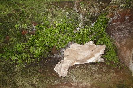 Rocks with fern and moss covered with a lonesome little piece of wood Фото со стока