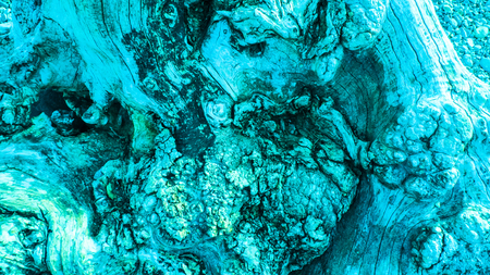 Age gnarled tree, olive tree, colored in turquoise, with cartilage, gristle and knotholes