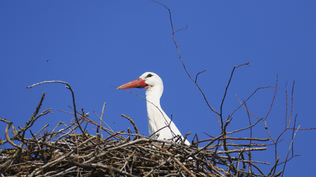 Stork in the nest, high above the roofs of the town