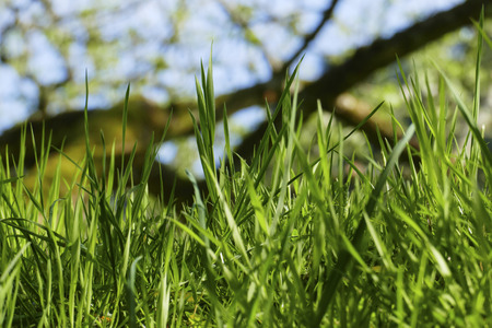 Blades of grass on a green meadow in the wind
