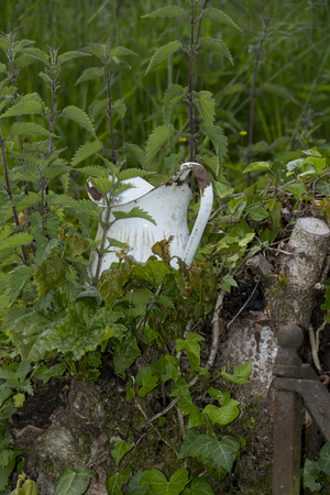 An old jug, pot from email con nettles overgrown, covered