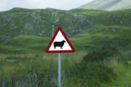 Traffic sign, sheep on white background with red triangle in the Highlands of Scotland