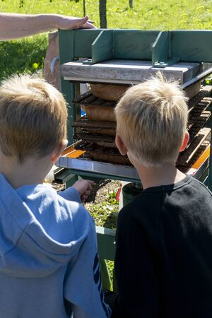 Children observe the process in the juice press, Trotte