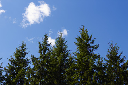 finland: forest, Finland