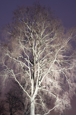 searchlight: tree at night colored with searchlight beam Stock Photo