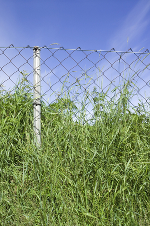 wire netting: wire netting fence