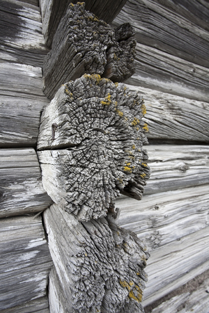 weathered old logs Stock Photo