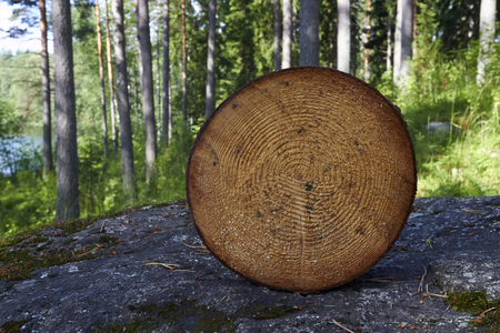 woodcutting: cut tree Stock Photo