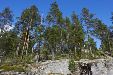 bedrock: trees growing on bedrock, Finland