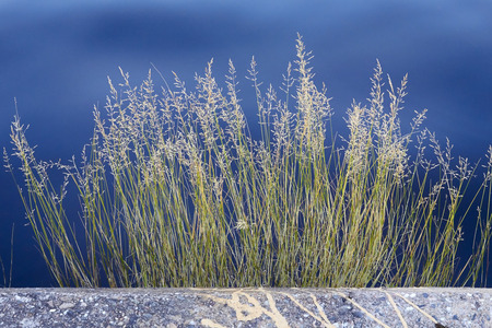 tuft: tuft of grass against water at harbour