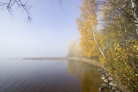 lakeshore: foggy lakeshore in Sotkamo Finland