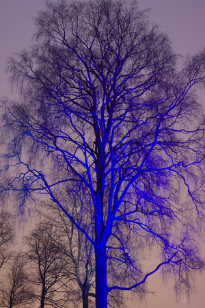 tree at night colored with searchlight beam Stock Photo