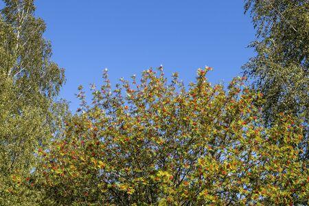 green foliage against blue sky, Finland Imagens