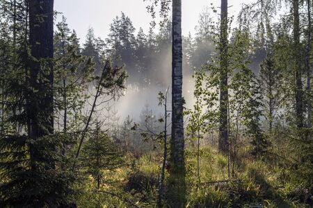 early morning at a foggy forest, Finland Imagens - 131800810