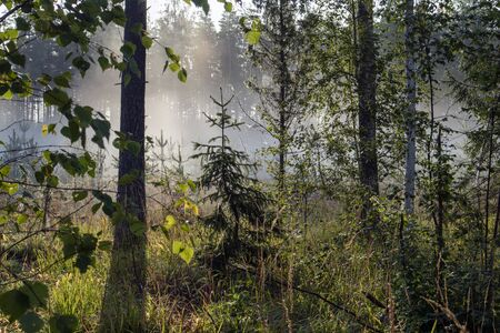 early morning at a foggy forest, Finland Stock Photo