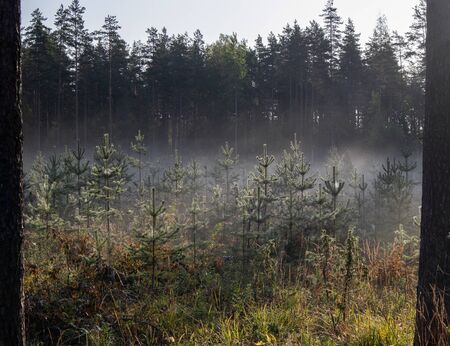 early morning at a foggy forest, Finland Imagens